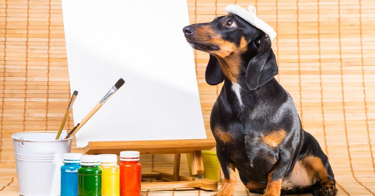 Dachshund a creative companion
