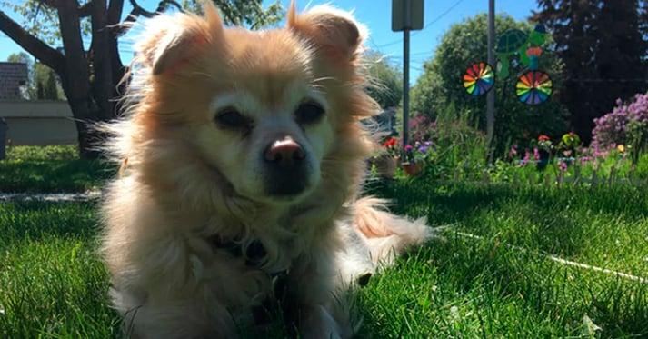 Kaiser rescue dog
