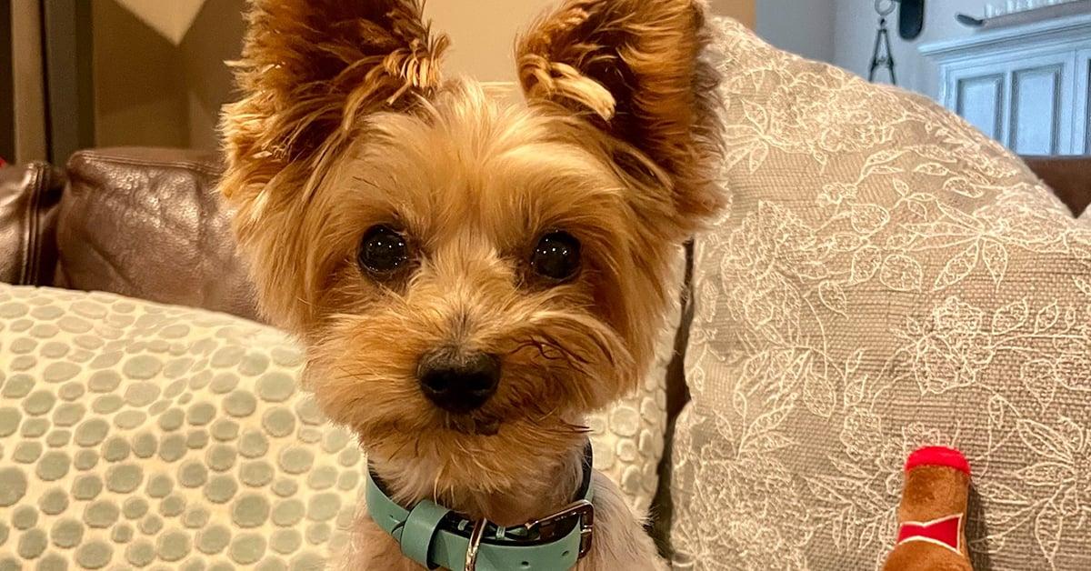 Maverick rescue dog