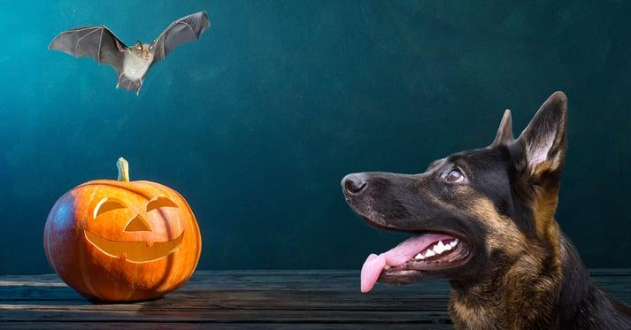 Dog looking at bat