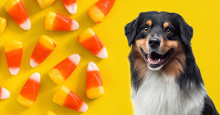 Dog and candy corn