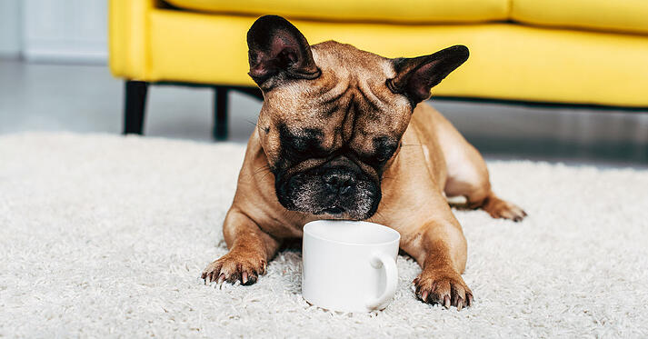 Dog and coffee cup