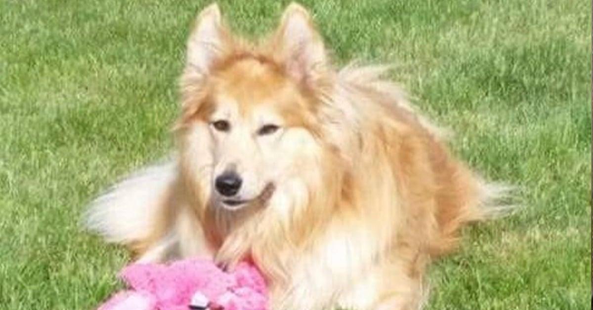 Rosa rescue dog