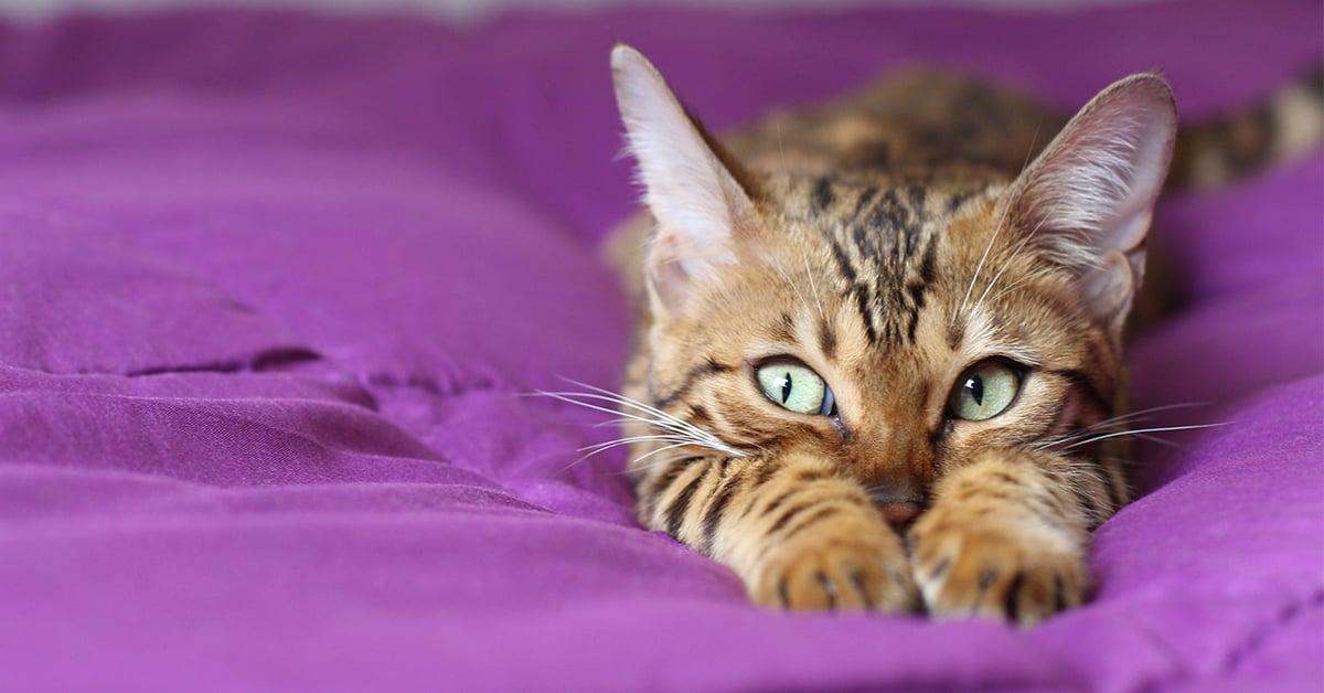 Sneaky kitten on a blanket