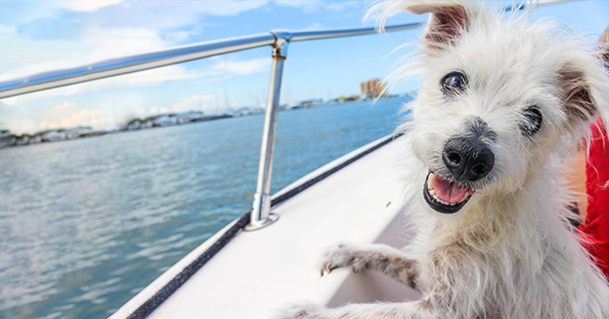 VetHelpline dog on a boat-1